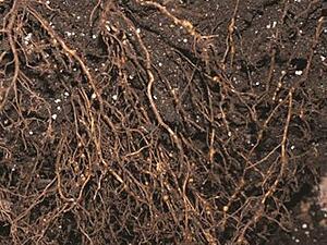 The Secrets of Healthy Soil