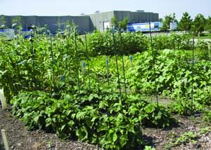 Uponor Community Garden