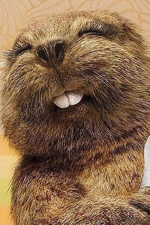 Meet the Beaver of Mariposa Meadows