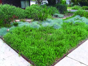 Slideshow: Eco-Friendly Landscaping: Replace Your Lawn