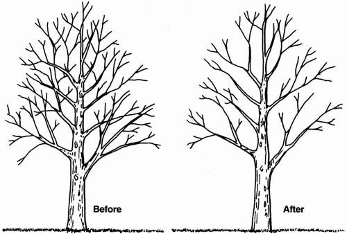 Rules of Thumb for Pruning