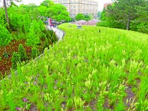 Green Roof, Brooklyn, NY