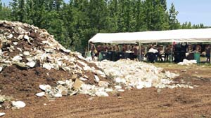 Composting cups and plates and Bonnaroo