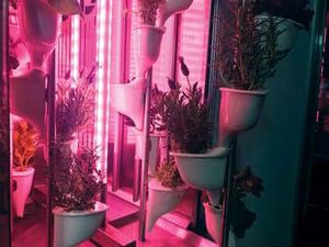 Natufia Garden - redlight-web