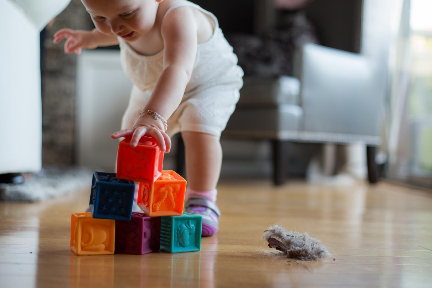 toxins in household dust