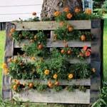 Container Garden Strategies