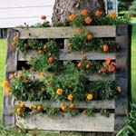 Container Garden Strategies