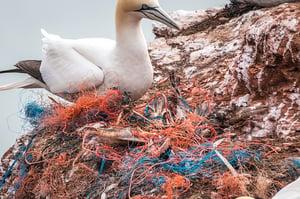 Global Plastic Plague Reaches Epidemic Proportions
