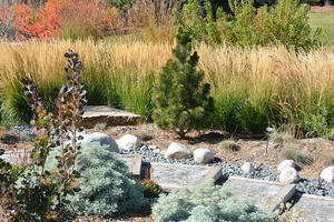 Transitioning from a Water-Consuming to a Xeriscaped Yard