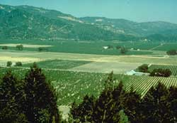 Wide view across grape fields.