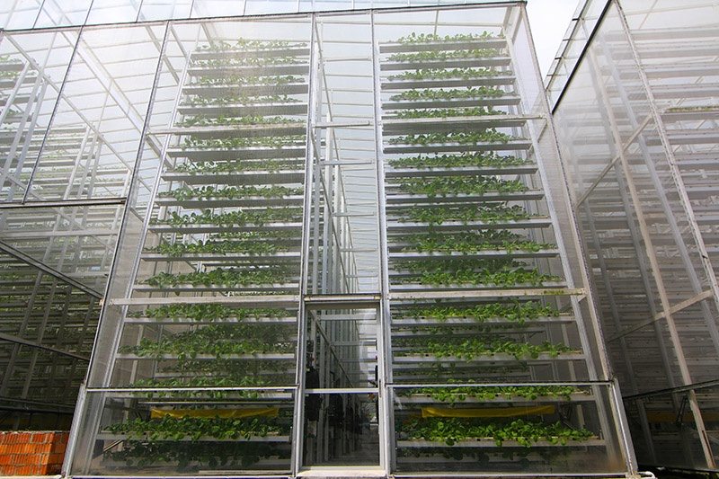 Plants rotating in trays at Sky Greens