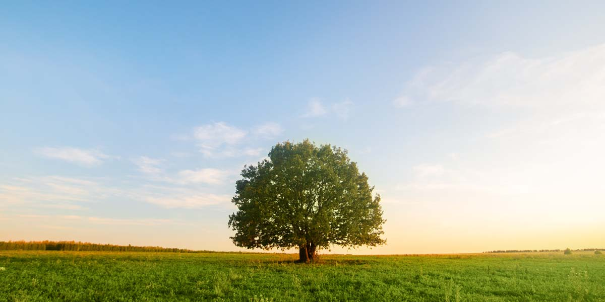 """""""Tree Talk"""" Webinar Addresses How Sustainability Can Be Affordable"""