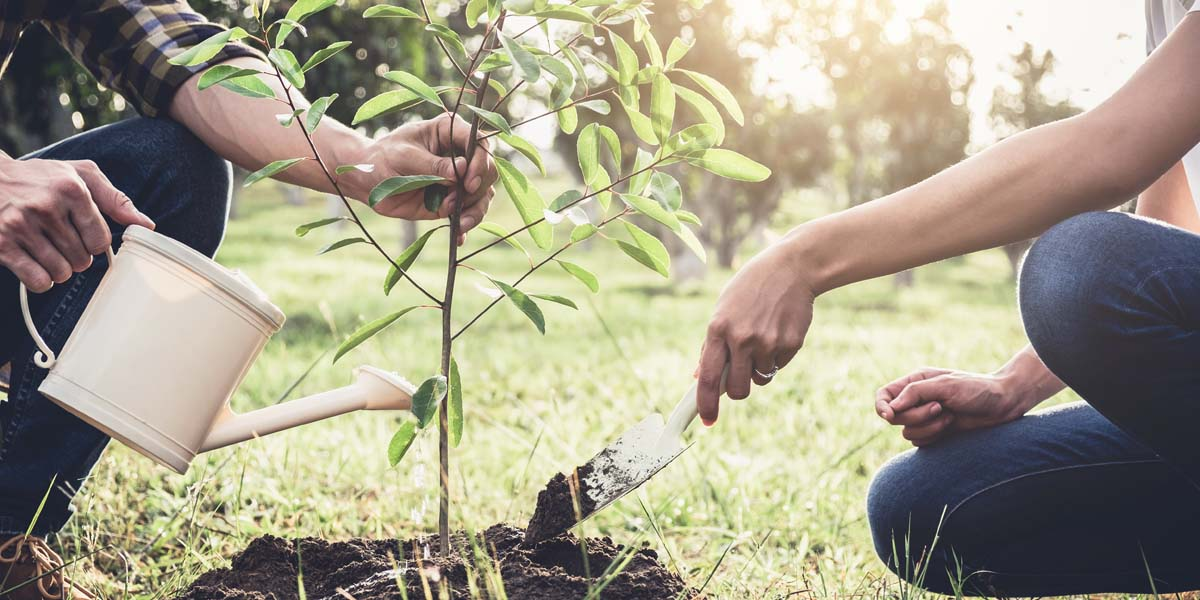 Join RESNET's One Tree Pledge
